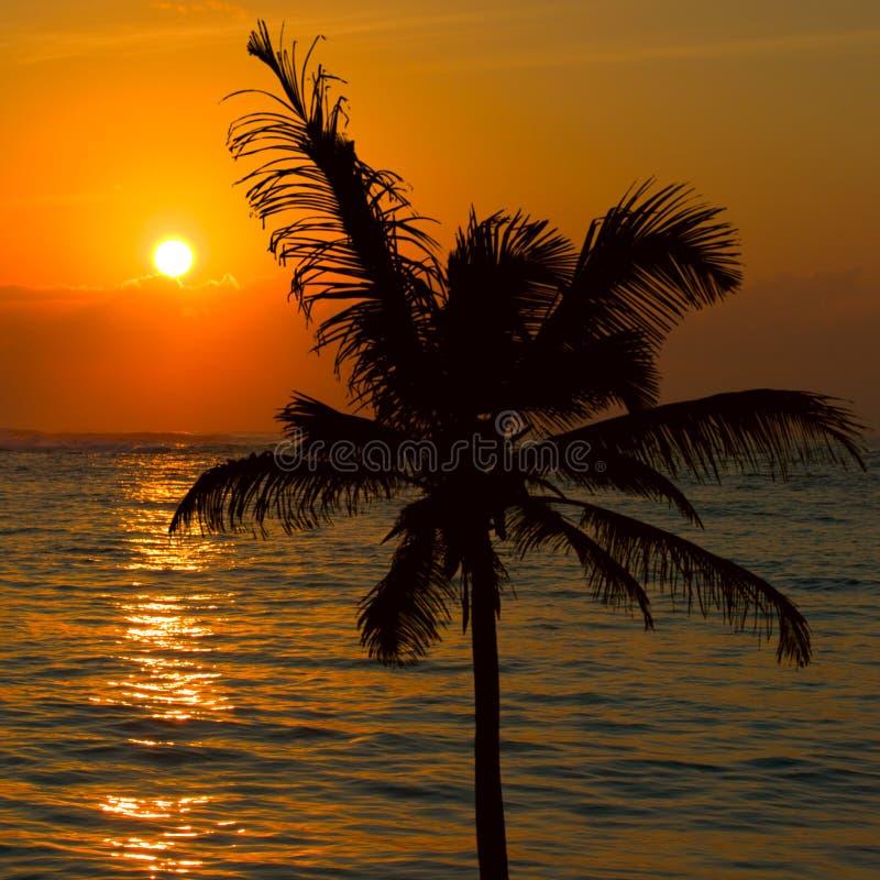 Tropical sunset scene royalty free stock image
