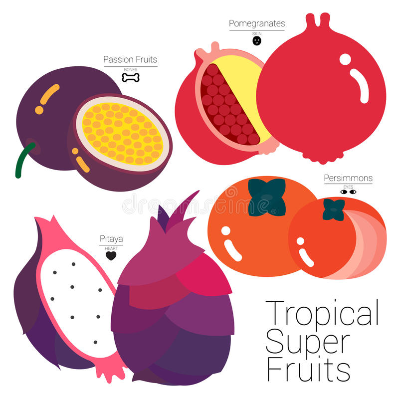 TROPICAL SUPER FRUITS. Four colorful tropical fruits packed with useful nutritions that it has been called Super Fruits royalty free illustration