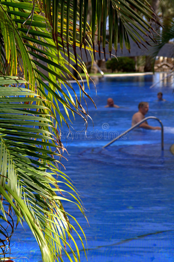 Download Tropical swimming pool stock image. Image of palm, summery - 23377129