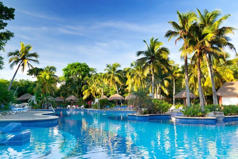 Tropical swimming pool at sunrise stock image