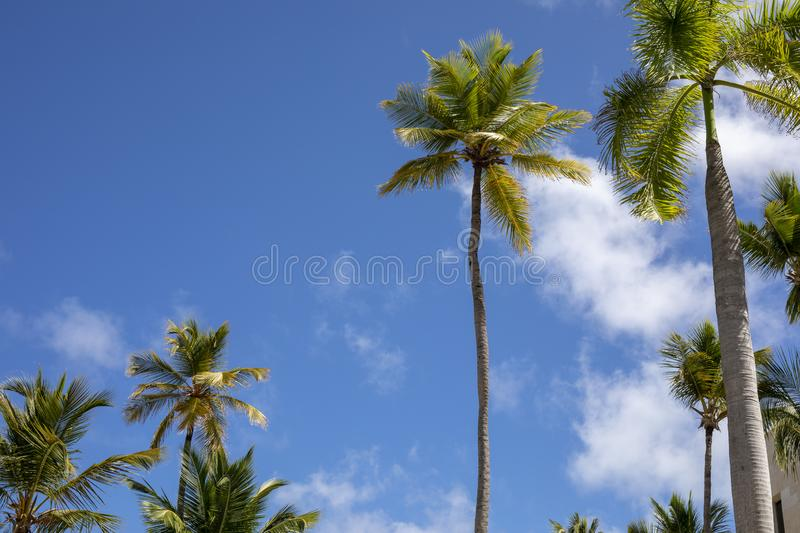Tropical Tree with Beautiful Blue Sky. Beautiful blue sky and tropical trees royalty free stock image