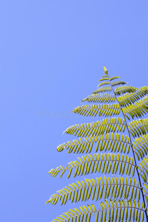 Download Tropical tree fern stock photo. Image of tourism, colorful - 13248770