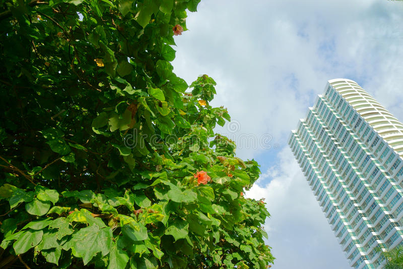 Tropical tree and skyscraper. Beautiful tropical tree and skyscraper stock photo