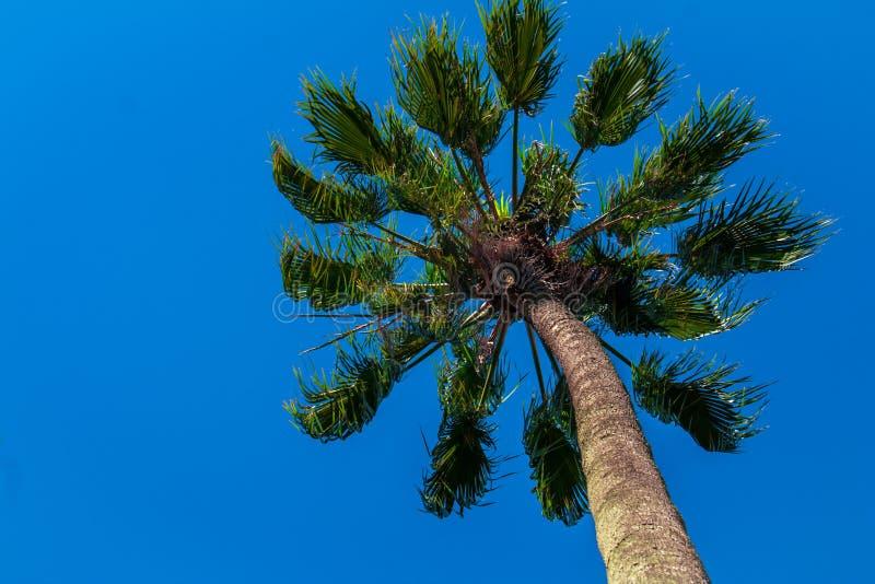 Tropical tree stock image