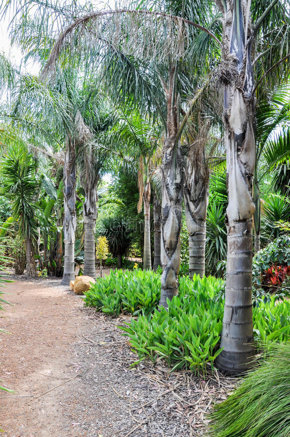Tropical Trees at Amaze'n Margaret River stock photography