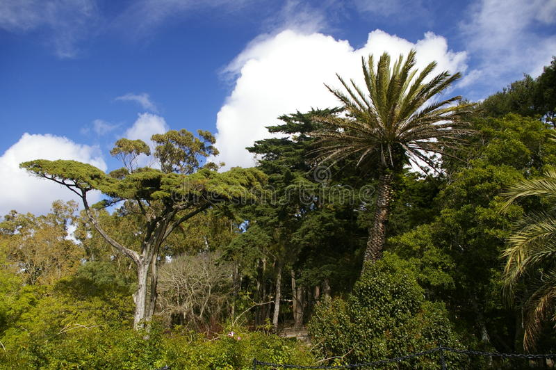 Tropical trees stock photography