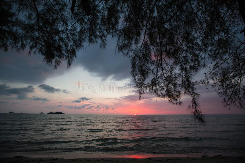 Tropical trees silhouetted against a dusk blue sky on sea beach. Nature. Tropical trees silhouetted against a dusk blue sky on sea beach royalty free stock photo