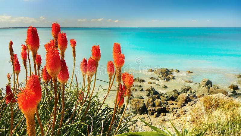 Tropical Turquoise Sea Ocean Coast Flowers stock photo