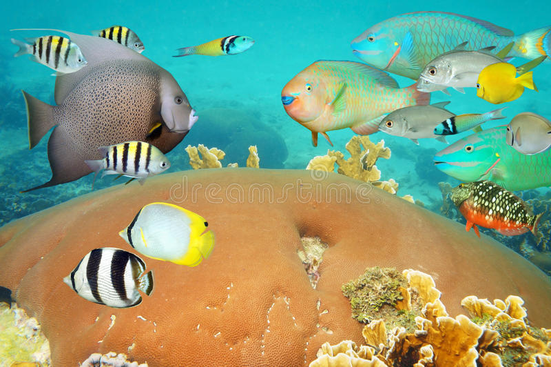 Tropical underwater life with colorful coral fish stock photography
