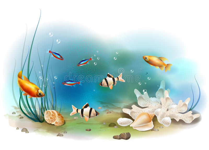 Tropical underwater world. Illustration of the tropical underwater world stock illustration
