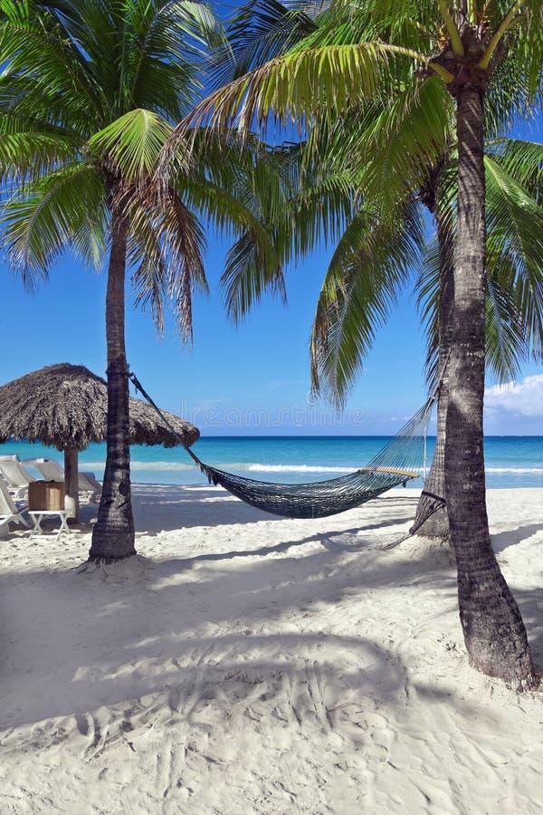 Download Tropical Vacation stock photo. Image of hammock, ocean - 28512738