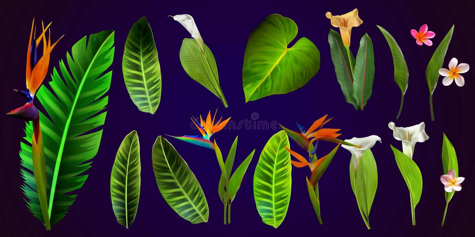 Tropical vector flowers. card with floral illustration. Bouquet of flowers with exotic Leaf isolated on white background. stock illustration