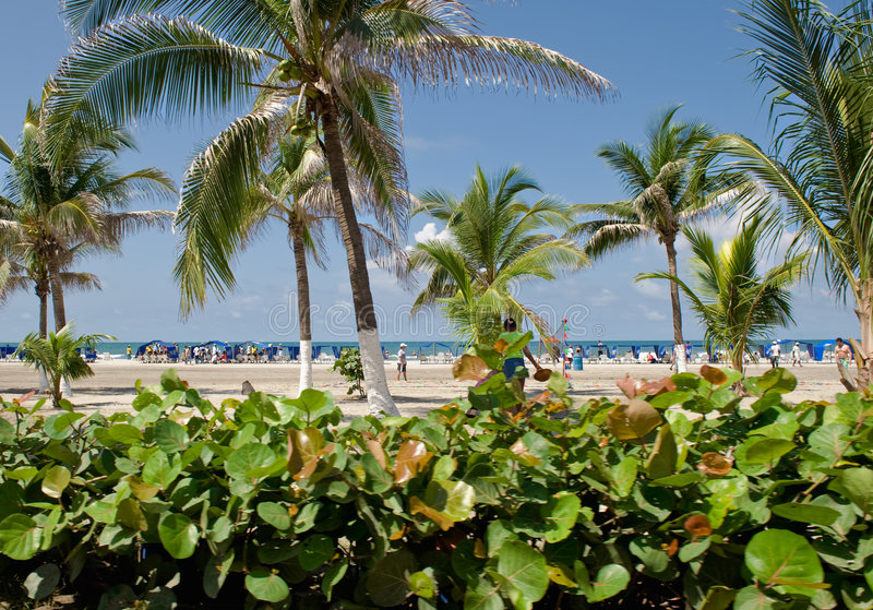 Download Tropical Vegetation And Beach Stock Image - Image: 9095767
