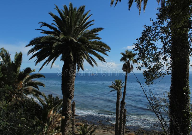 Scenic View of Ocean off Point Fermin, Palos Verdes Peninsula, Los Angeles, California. A tropical view of the ocean framed by palm trees from Point Fermin on stock photo