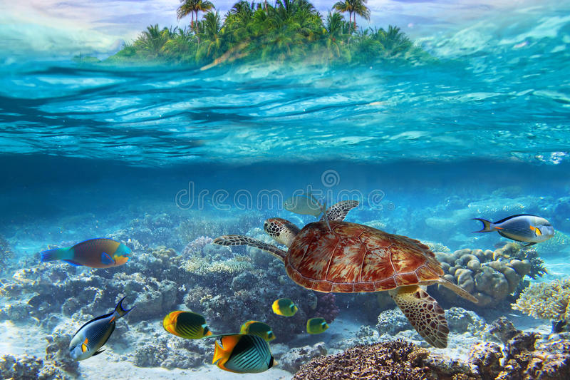Tropical Water Diving Stock Images