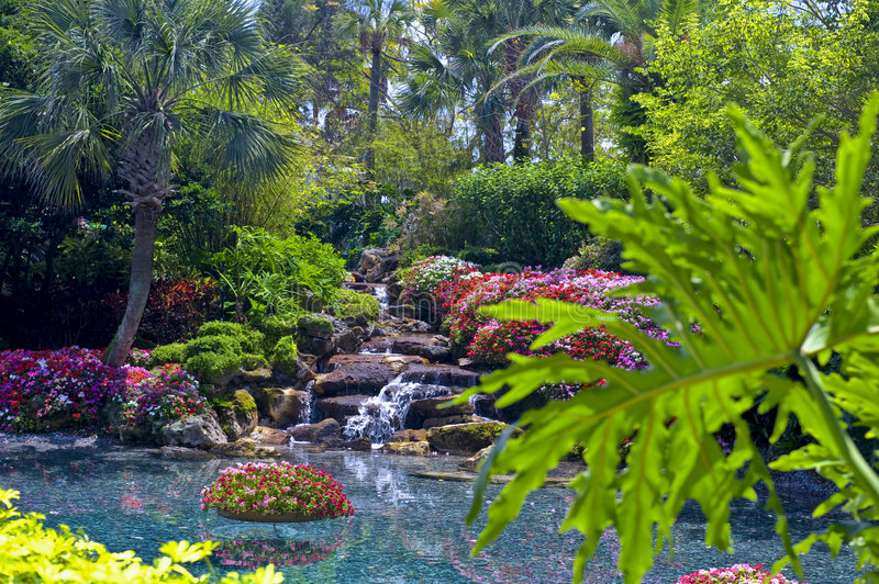 Tropical Water Garden. Colorful tropical garden with water and plants - daytime stock photos