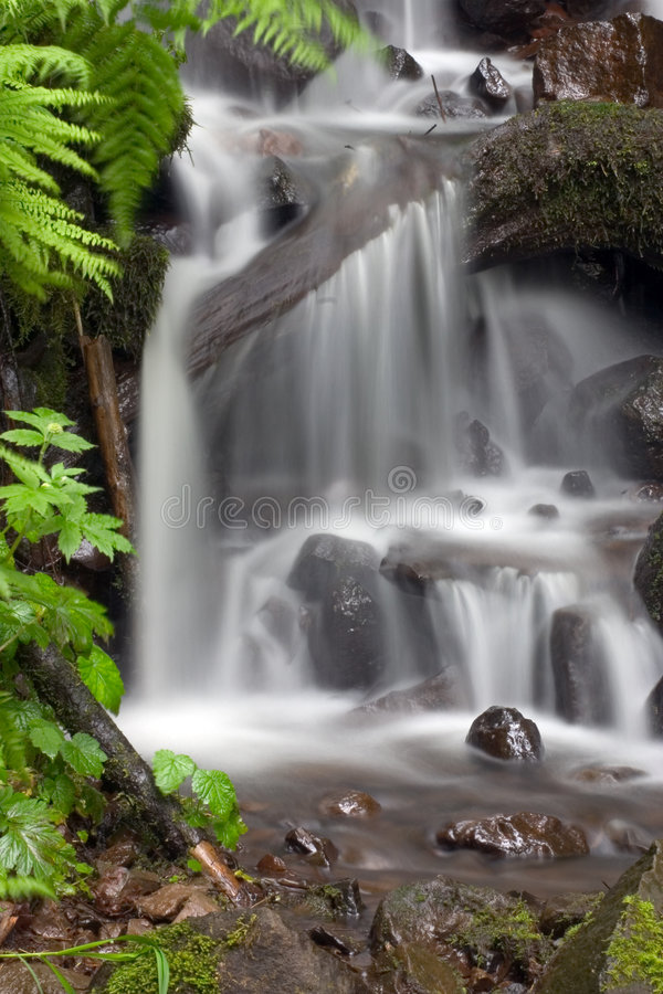 Tropical waterfall. royalty free stock images