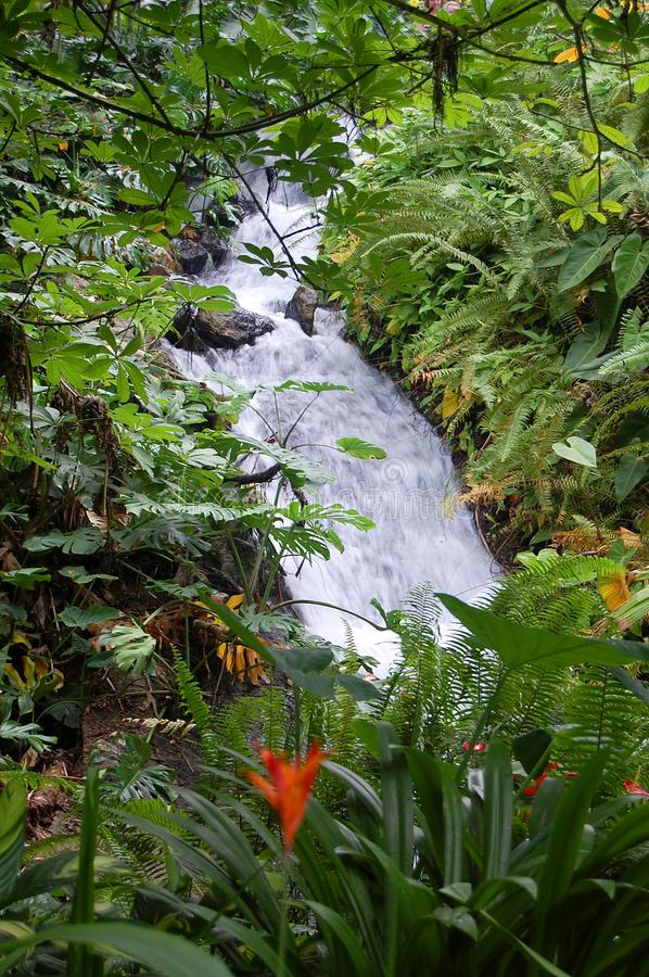 Download Tropical Waterfall stock photo. Image of managed, project - 21740532