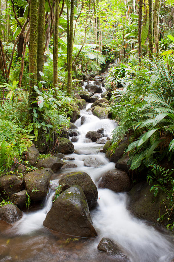 Free Tropical Waterfall Stock Photography - 23889682