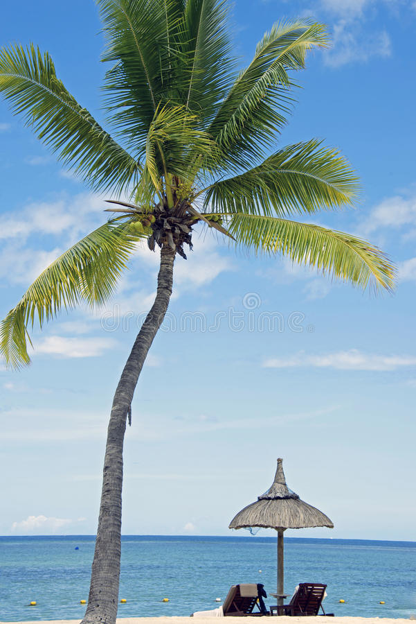 Free Tropical White Sand Beach With Coconut Trees, Stock Photography - 38774162