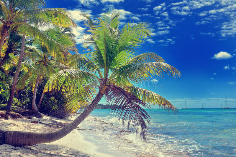 Tropical white sandy beach with palm trees. Saona Island, Dominican Republic royalty free stock photos
