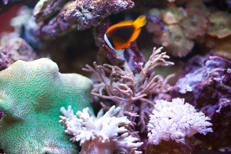 Download Tropical world stock photo. Image of deep, scuba, animal - 8316086
