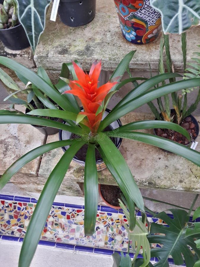 Tropicales del Flores fotografie stock libere da diritti