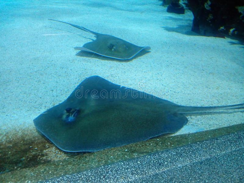 Tropicarium Budapest. Fish, bluewater, cleanwater royalty free stock photography