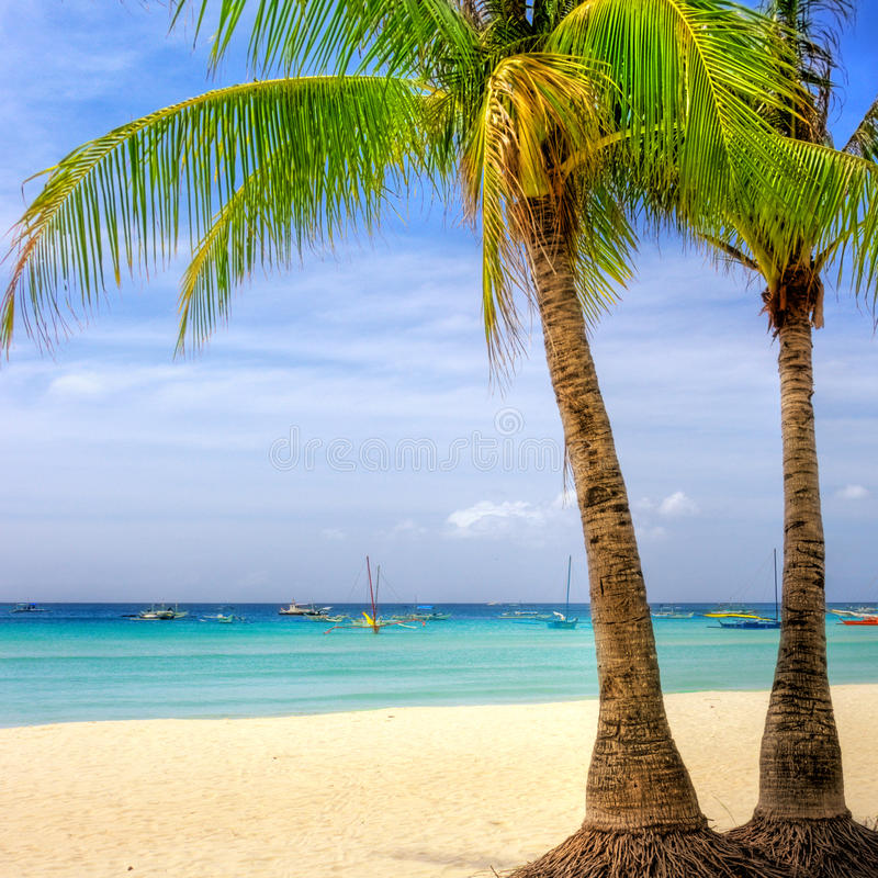 Tropici fotografia stock libera da diritti