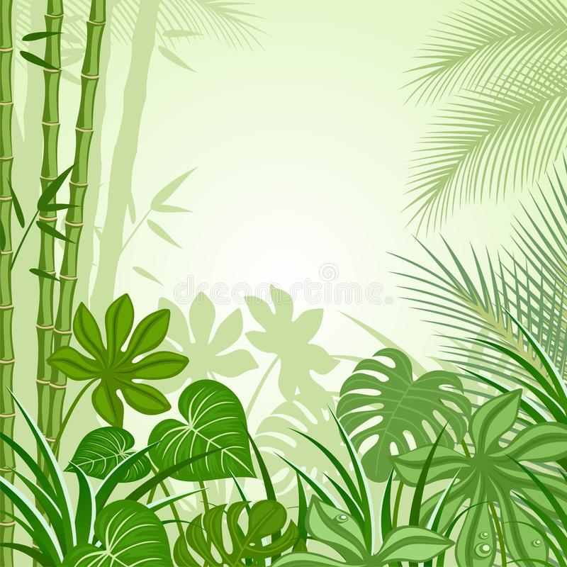 Tropics. The background image of the rainforest