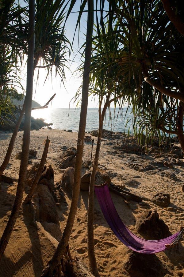 Tropics isolados da praia da selva do Hammock fotos de stock