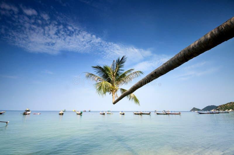 tropikalna łodzi plażowa palma zdjęcia royalty free