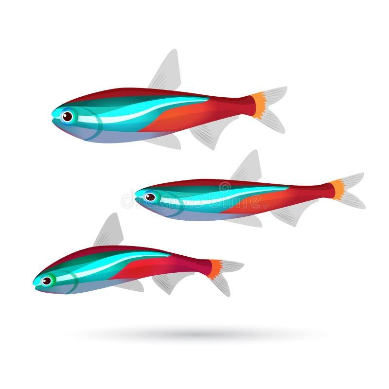 Tropikalna akwarium ryba na białym tle Neonowi morscy mieszkanowie ilustracji