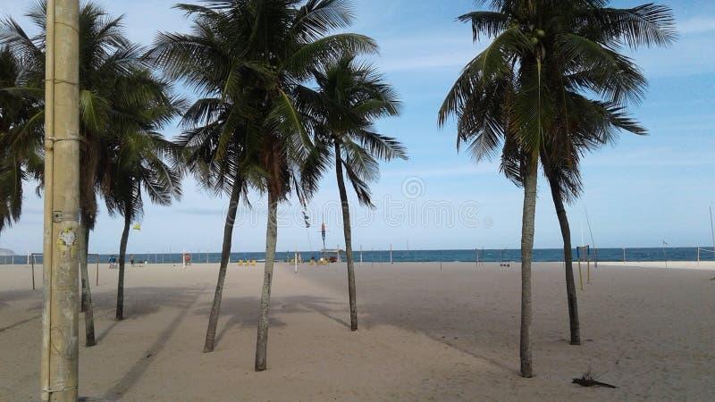 - Tropikalna - Brazylia, Rio De Janeiro, Leme - drzewka palmowe - plaża krajobraz - zdjęcie stock