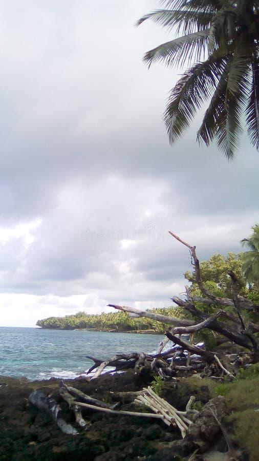Tropikalna brzeg linia zdjęcie royalty free