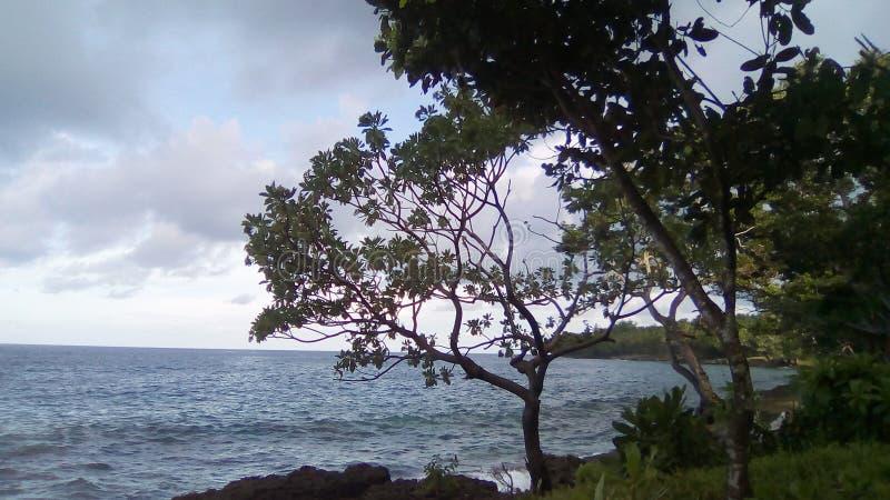 Tropikalna brzeg linia fotografia royalty free