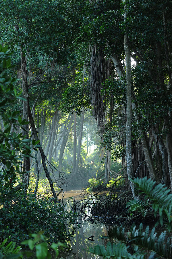 tropikalna clearingowa lasowa dżungla fotografia stock