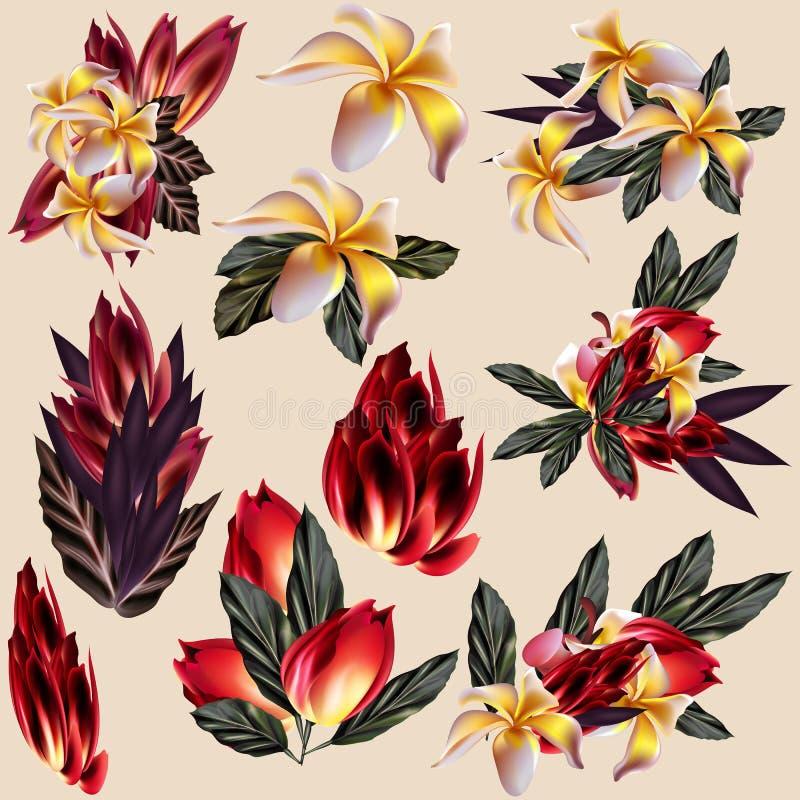 Tropikalna kolekcja mango i inny kwitnie ilustracja wektor