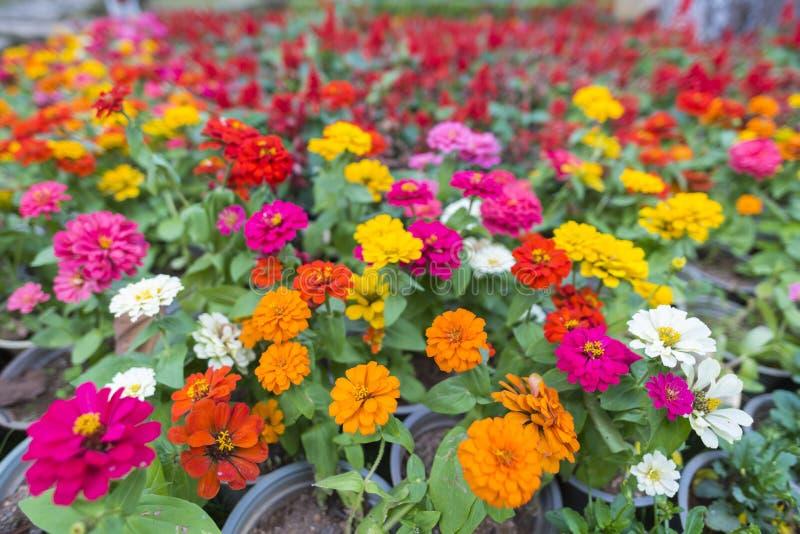 Tropikalna kolorowa kwiat roślina z białym kolorem zdjęcia royalty free