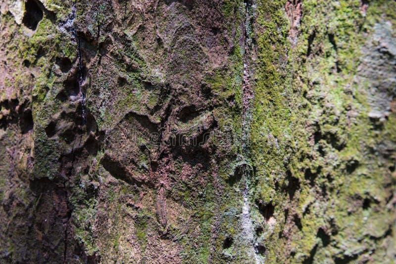 Tropikalna Lasowych drzew tekstura obraz stock