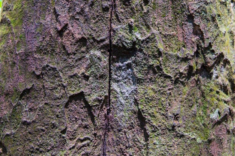 Tropikalna Lasowych drzew tekstura zdjęcia royalty free