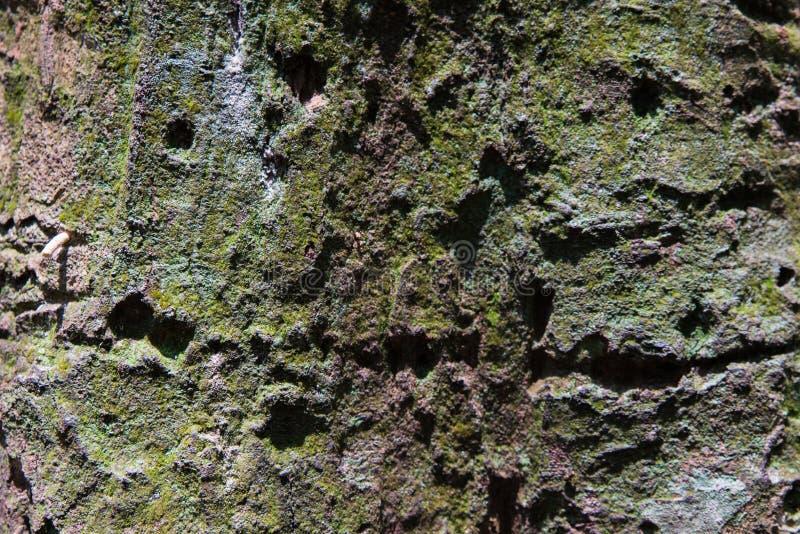 Tropikalna Lasowych drzew tekstura zdjęcie royalty free
