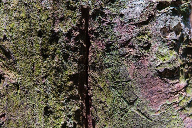 Tropikalna Lasowych drzew tekstura obrazy royalty free