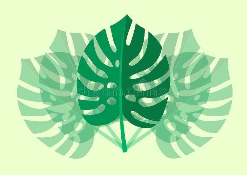 Tropikalna liścia Monstera roślina odizolowywająca na jasnozielonym tle również zwrócić corel ilustracji wektora ilustracji