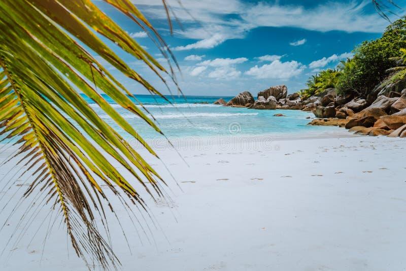 Tropikalna losu angeles Digue wyspa Seychelles, biel plaża z, granitu drzewkiem palmowym i skałami zdjęcia royalty free