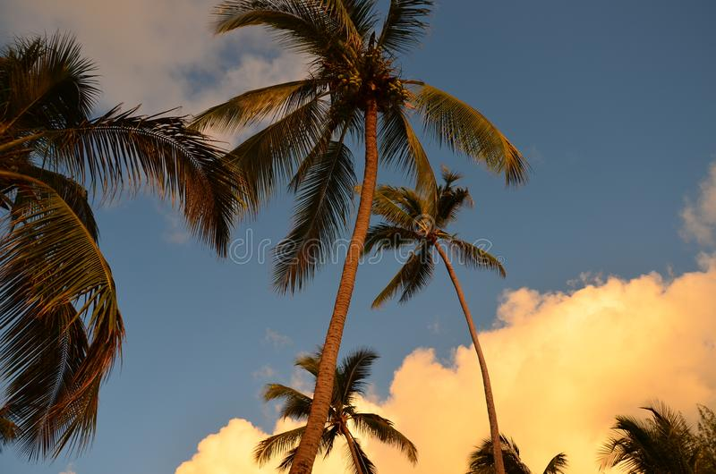 Tropikalna natura - drzewko palmowe obraz stock