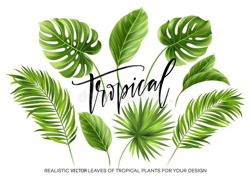 Tropikalna palma opuszcza set odizolowywa na białym tle również zwrócić corel ilustracji wektora ilustracji