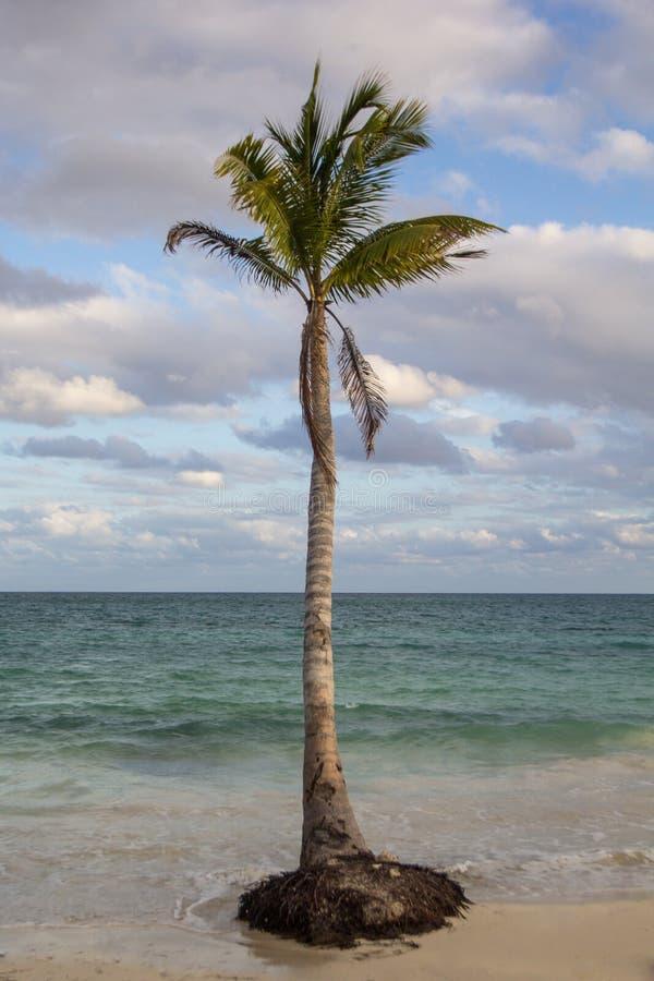 Tropikalna Palmowa buda obrazy stock