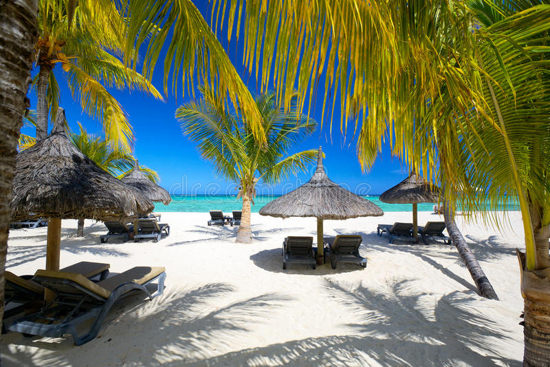 Tropikalna palmy plaża zdjęcia royalty free