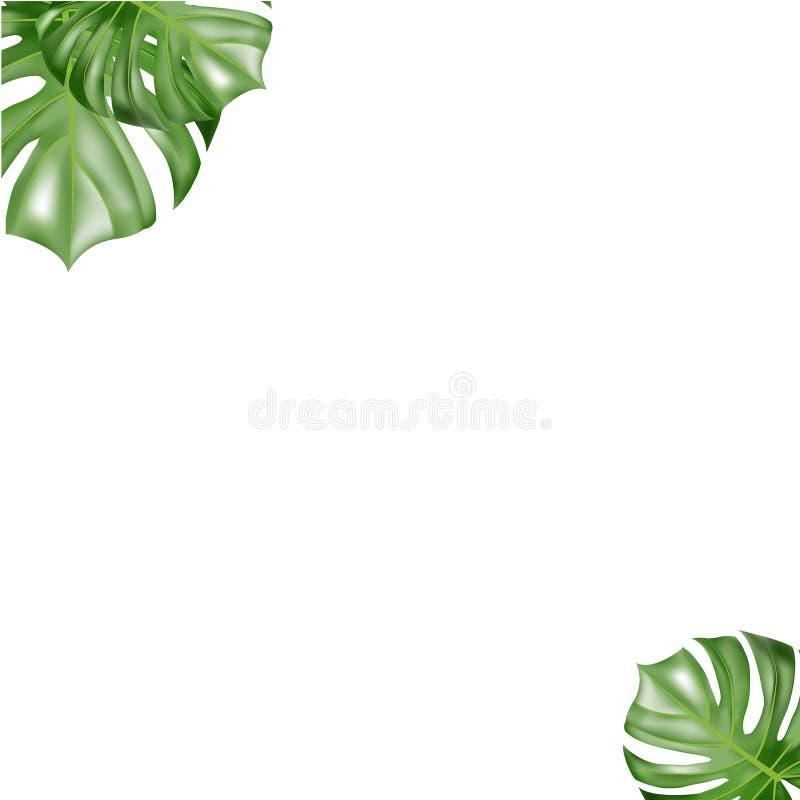 Tropikalna papierowa palma li?ci rama zdjęcie royalty free
